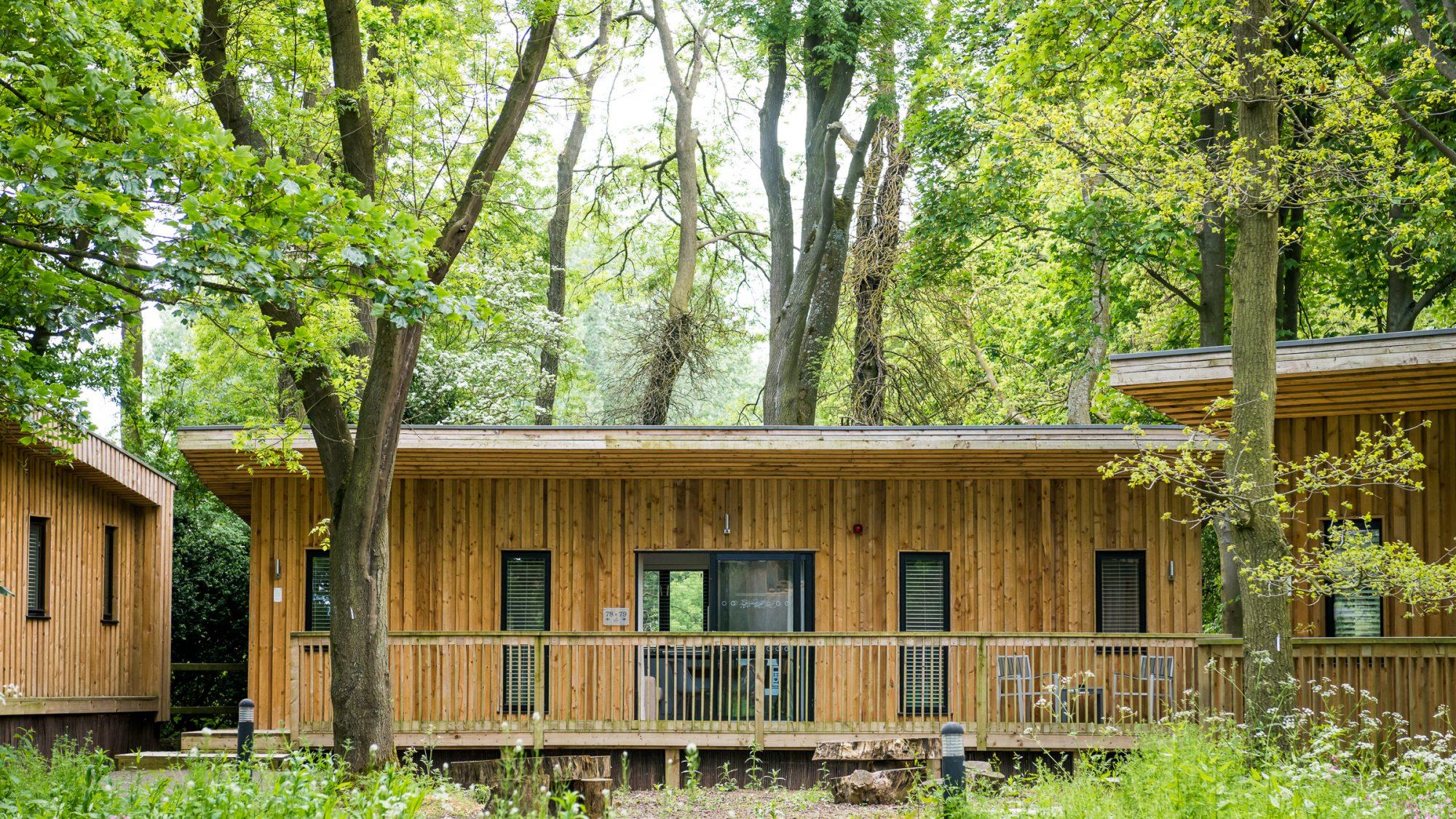 Woodland snug cabin accommodation